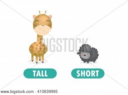 Opposite Tall And Short, Words Antonym For Children With Cartoon Characters Cute Little Sheep With G