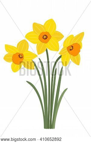 Yellow Daffodils On A White Background. Spring Symbol, Bouquet For March 8. Flowers For Easter. Yell