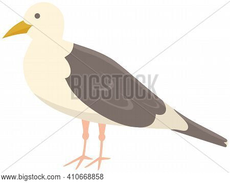 Seagull Standing On Its Feet. Sea Bird Isolated On White Background. Seagull With Folded Wings And C