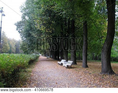 An Alley In The Park In Early Autumn. Green Trees And Dry Leaves On The Ground. Benches Along The Al