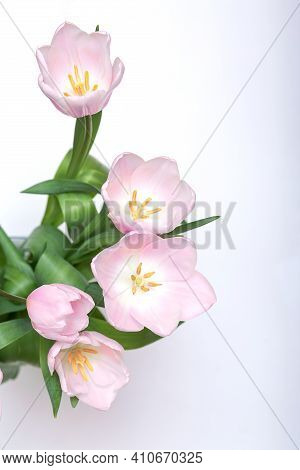 Bouquet Of Pink Tulips Isolated On White Top View, Spring Flower Concept Greeting Card Copy Space
