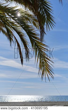 Vertical Image Leaf Of Green Palm Tree Against Blue Sky Sunshine, View To Calm Mediterranean Sea Wat