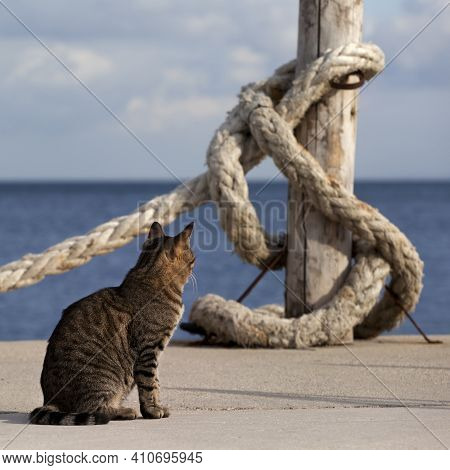 Port Cat Basking In Sun And Rope On Seafront In Sunny Summer Day. Close-up View.