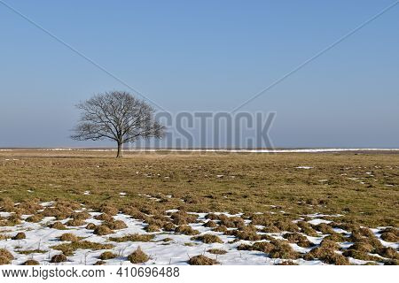 Alone Tree In A Wide Grassland At Ottenby In Sweden