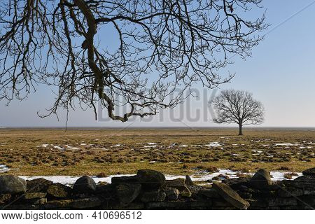 Springtime In The Great Grassland At Otteby On The Island Oland  In Sweden
