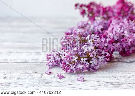 Purple Lilac Branch On Table, Floral Still Life On Gray Wooden Background. Purple Lilac Spring Branc