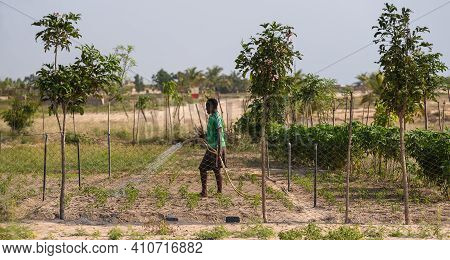 Young Ghana Woman Watering Her Land With Newly Planted Fields. 12 November 2020 Keta Ghana West Afri