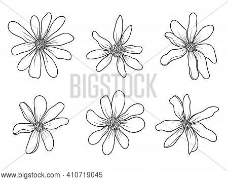 Hand Drawing Wildflowers On White Background. Daisies In Sketch Style. Springtime Vector Flowers. Al