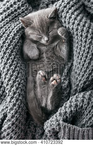 Portrait Of Beautiful Gray Kitten Relax Sleep On Soft Grey Knitted Background. Home Pet Napping. Kit