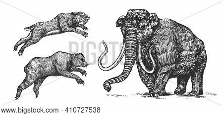Mammoth Or Extinct Elephant, Cave Bear And Saber Toothed Tiger. Vintage Extinct Animal. Retro Mammal