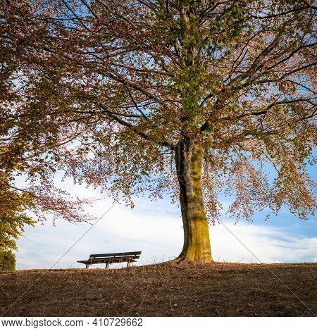 Park bench under an autumn tree