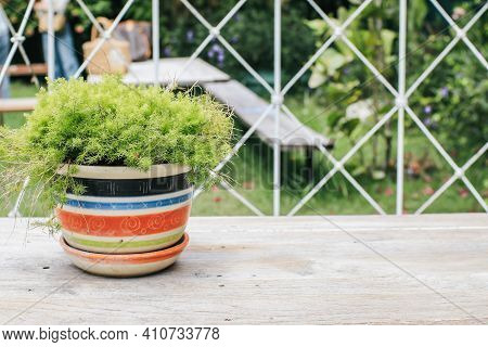 Green Plant In Pot On Wooden Table Background With Copy Space. Banner With Copy Space.