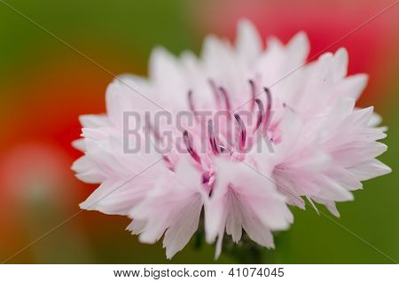 Pink Flower Close Up