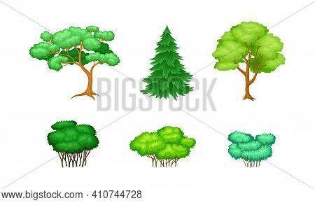 Trees With Exuberant Green Foliage And Trunk Vector Set