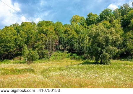 Beech Forest On The Hill. Beautiful Nature Landscape In Mountain On A Sunny Day