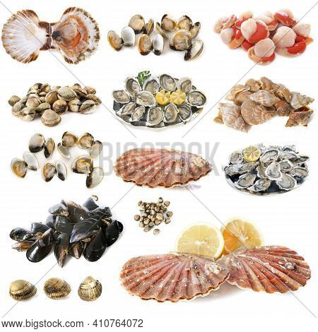 Many Shellfish In Front Of White Background