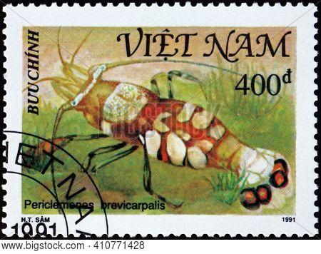 Vietnam - Circa 1991: A Stamp Printed In Vietnam Shows Glass Anemone Shrimp, Periclemenes Brevicarpa