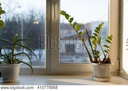 Aloevera And Zamiokulkas Standing On A Windowsill On A Sunny Day. Home Plants.