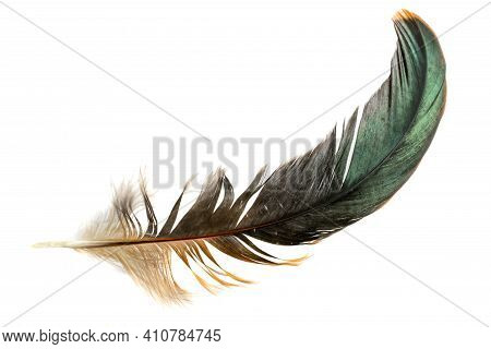 Black Feathers Of A Rooster On A White Isolated Background