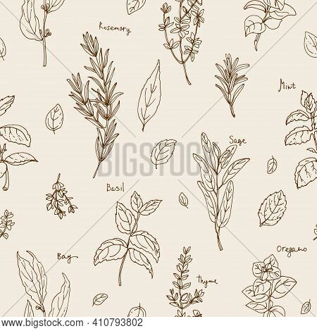 Pattern Herbs. . Italian Herb Drawn Black Lines On A White Background. Vector Illustration. Basil, P