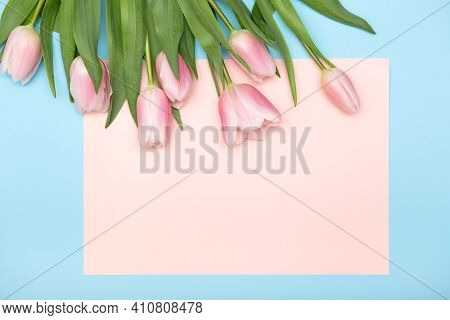 Spring Cozy Composition. Pink Tulips On Blue Pastel Background, Copy Space, Greeting Card