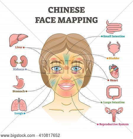 Chinese Face Mapping As Alternative Medicine Health Diagnosis Outline Diagram