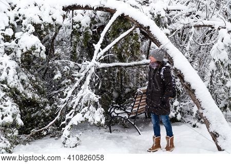 Young Woman Standing Near Fallen Tree After Sleet Load And Snow In A Snow-covered Winter Park. Snowy