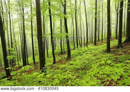 Spring trees Nature misty forest Nature landscape woods fog Nature background landscape Nature landscape Nature landscape Nature landscape Nature background Nature landscape Nature background Nature background landscape Nature background Nature landscape.