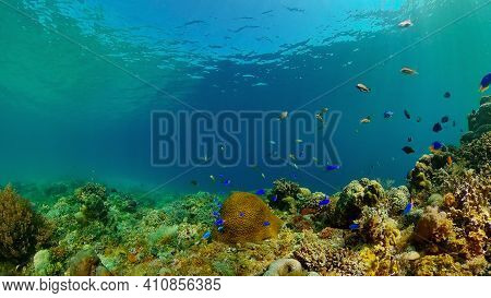 Tropical Fish Corals Marine Reef. Underwater Sea Tropical Life. Tropical Underwater Sea Fishes. Unde