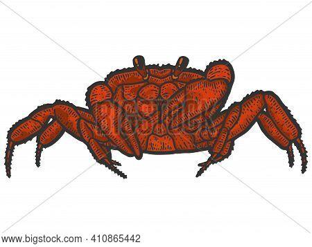 Red Rthropoda Crab. Sketch Scratch Board Imitation Color.