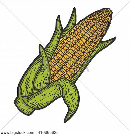 Ripe Corn Cob With Leaves Ear Of Corn Hand. Color Sketch Scratch Board Imitation.