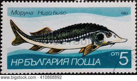 Republic Of Bulgaria - Circa 1983: Postage Stamp 'european Sturgeon - Huso Huso' Printed In Republic