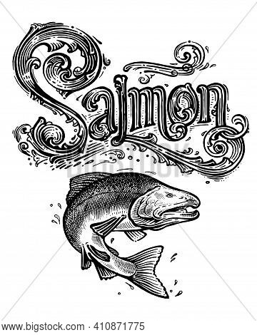 Salmon, Vector Logo And Illustration. Vintage Graphics And Handwork. Drawing With An Ink Pen And Pen