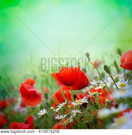 Poppy meadow in the beautiful light on the background