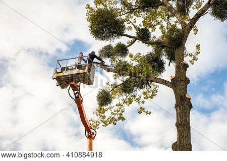 Two Service Workers Cutting Down Big Tree Branches With Chainsaw From High Chair Lift Crane Platform