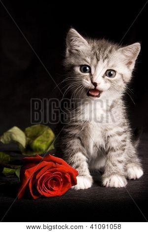 little cat with red rose