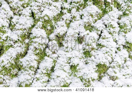 Macro of tree bark covered in snow poster