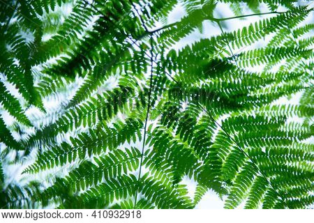 Fern growing in forest, summer nature outdoor