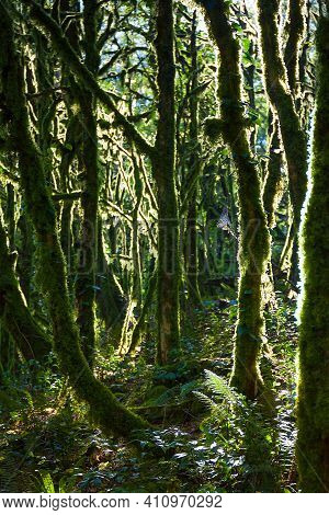Beautiful Landscape With Forest Jungle Trees. Wonderland Fairy Tale Scenery . Sun Shines Through The