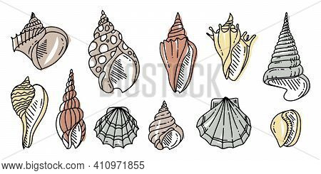 Colorful Doodle Set Of Sea Shell. Various Sea Shell In Outline. Hand Drawn Flat Illustration. . Vect