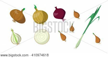 A Bright Vector Set Of Colorful Onions And Green Onions. A Fresh Cartoon Vegetable Isolated On A Whi