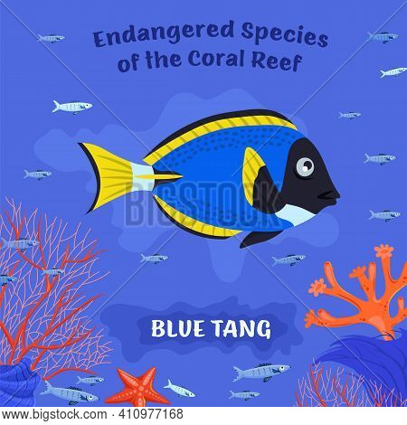 Coral Reef Inhabitants. Endangered Fish Species. Threatened Fish Stocks. Blue Tang. Save The Ocean C