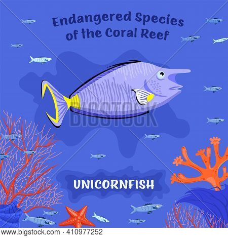 Coral Reef Inhabitants. Endangered Fish Species. Threatened Fish Stocks. Unicornfish. Save The Ocean