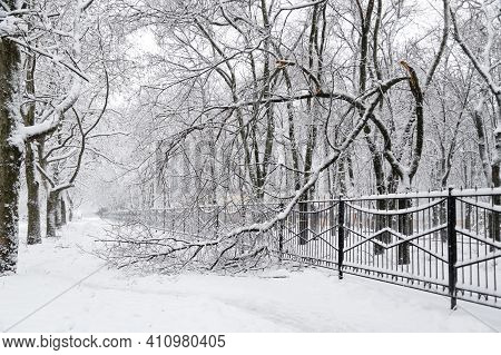 Falling Tree After Sleet Load And Snow At Snow-covered Winter Street In A City. Weather Forecast Con