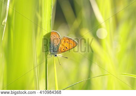 Butterfly spring morning Nature pet background Nature animal grass Nature background pet meadow Nature background Macro Nature animal Nature pet pet Nature background pet sun Nature background animal Nature pet Butterflies pet animal Nature background.