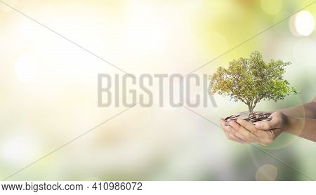 Tree Growth On Two Hand Holding Heap Of Coins On Greenery Blurred Background , Money Saving For Inve