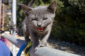 Scared kitten meowling while climbing a metal fence bar poster