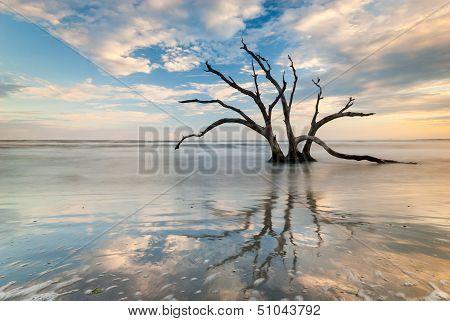 Charleston South Carolina Folly Beach Tree Silhouette