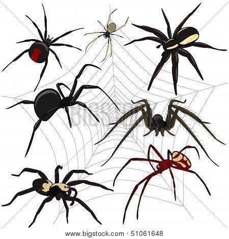 Spiders Set