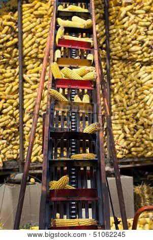 Elevator for corn cob